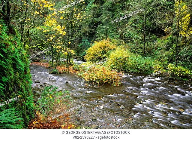 Oneonta Creek in Oneonta Gorge, Mt Hood National Forest, Columbia River Gorge National Scenic Area, Oregon