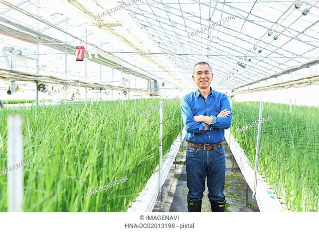 Senior man working at greenhouse