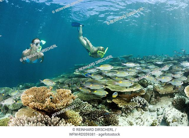 Two Women snorkel over Reef, Ellaidhoo House Reef, North Ari Atoll, Maldives