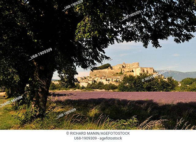 France Drome Provence . Lavender fields around the village of Grignan