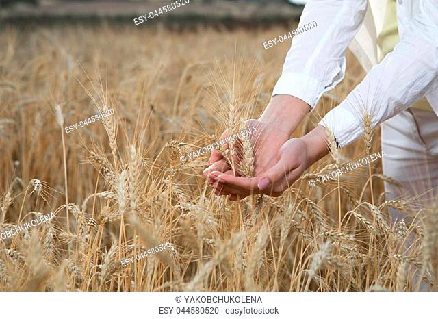 Close up of girl keeping ears of wheat in her palms. Growth and prosperity concept