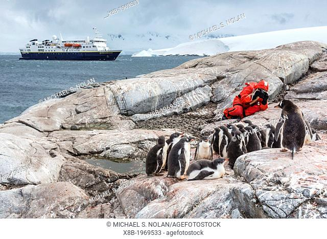 Staff from the Lindblad Expedition ship National Geographic Explorer (shown here is Photo Instructor CT Ticknor) photographing gentoo penguins at Jougla Point