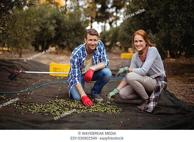 Smiling young man and woman collecting olives at farm