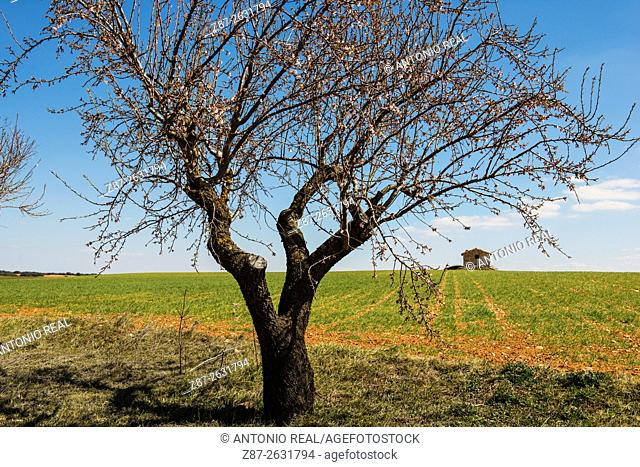 Tree and farmhouse, Corral Rubio and Laguna de Pétrola, Albacete province, Castilla-La Mancha, Spain