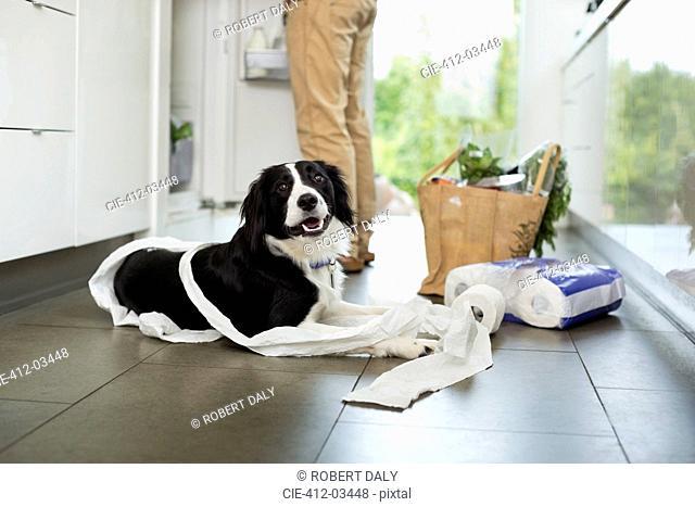 Dog unrolling toilet paper on floor