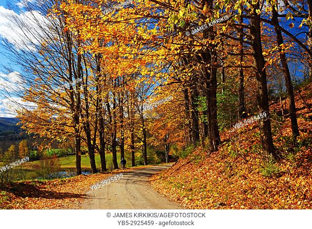 Autumn trees highlight a country road near Woodstock, Vermont