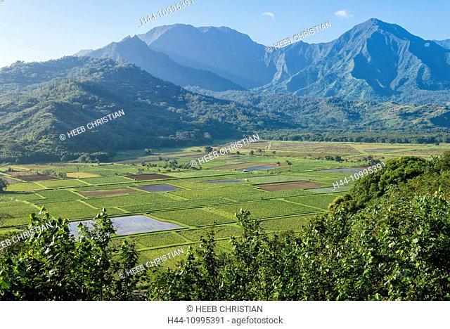 USA, Vereinigte Staaten, Amerika, Hawaii, Island, Kauai, Princeville, Taro, field, Kilauea Point viewpoint
