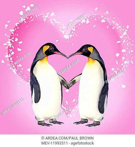 Penguins, pair kissing holding hands creating heart shape