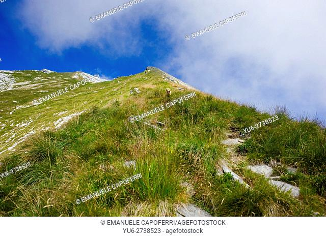 Path on mountain Pioda di Crana in Val Vigezzo, Piedmont, Italy