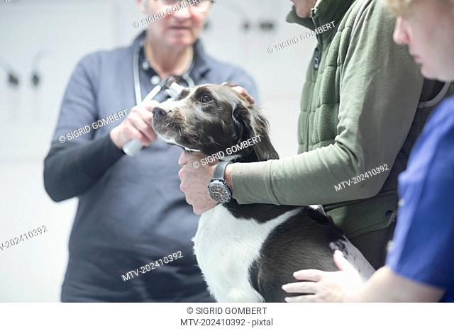 Veterinarians doing a check-up on a dog, Breisach, Baden-Württemberg, Germany
