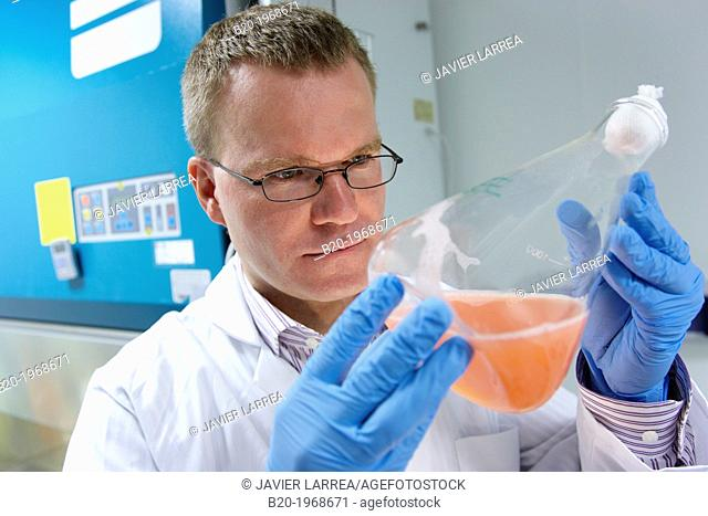 """Growth monitoring of carotenoid-producing yeast by incubation orbital, Cleanroom Microbiology, Biotechnology Laboratory, Health Area, Alava Technology Park"