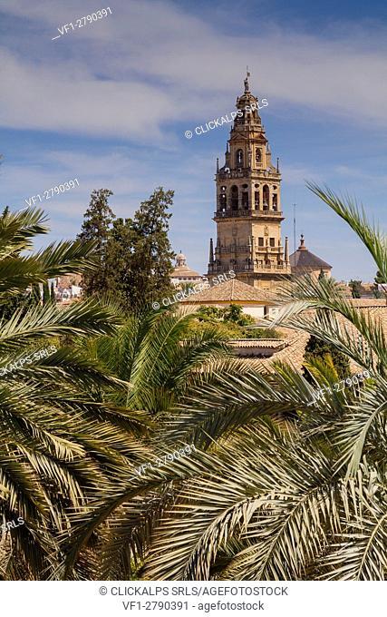 Córdoba, Andalusia, Spain. The minaret of Mezquita's Cordova among palm trees