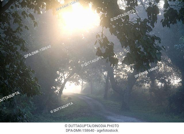 Sun through trees beautiful view of morning at Kaziranga national park ; Assam ; India