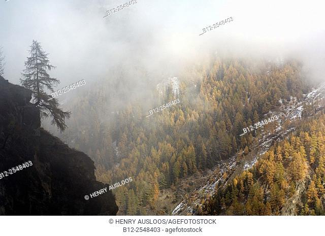 Italy, Alps, Aosta, National Park Gran Paradiso