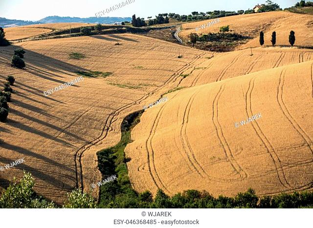 Fields of growing grain on rolling hills of Abruzzo. Italy