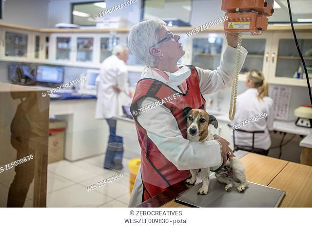 Woman getting a dog ready for x-rays