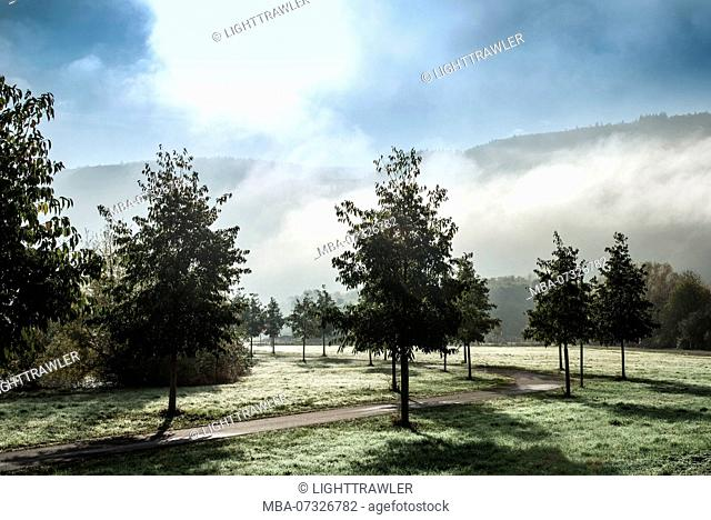 Moselle landscape in the morning mist
