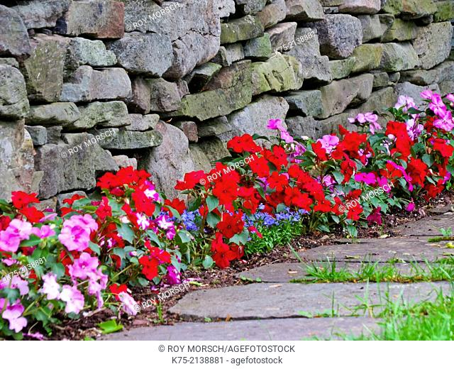 Impatiens and Lobelia by bluestone wall