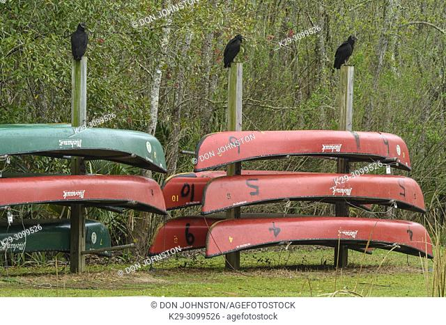 Canoes for rent with black vultures, Palmetto Island State Park, Louisiana, USA