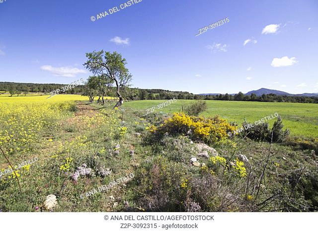 Spring landscape Matarrana county in. Teruel, Aragon, Spain