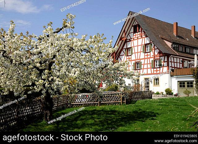 Haus in Allensbach