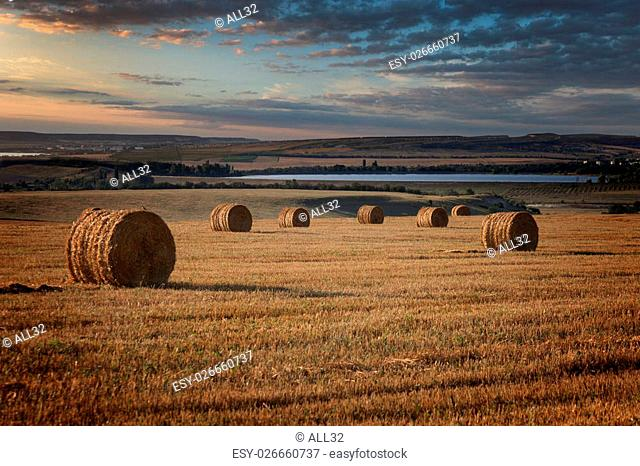 Field after mowing with haystacks at sunset