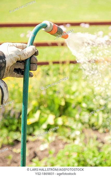 Man with working gloves holding a sprinkler and spraying water on his vegetables and plants