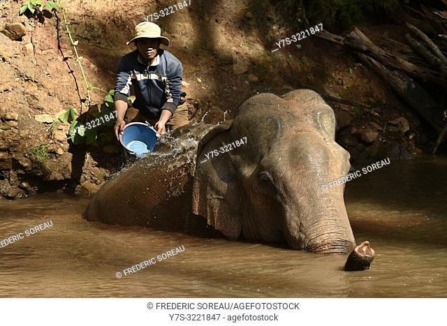 Man washing elephant in the Elephant Valley sanctuary in Mondolkiri province,Eastern Cambodia,Cambodia,South east Asia
