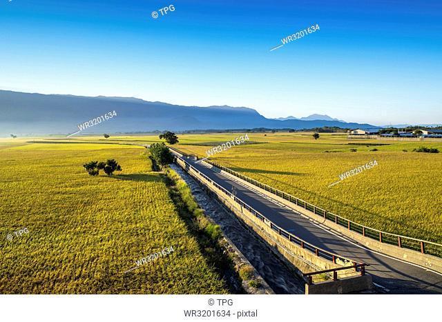Taitung Chishang Rice Field