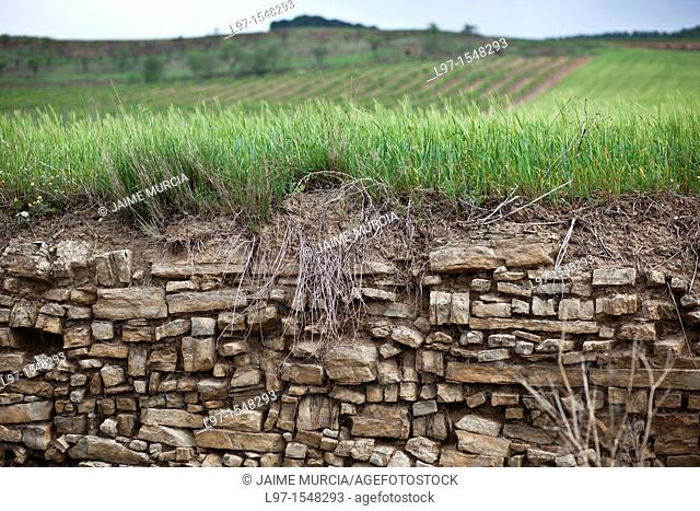 Stone retaining wall with wheat field in distance along Camino de Santiago
