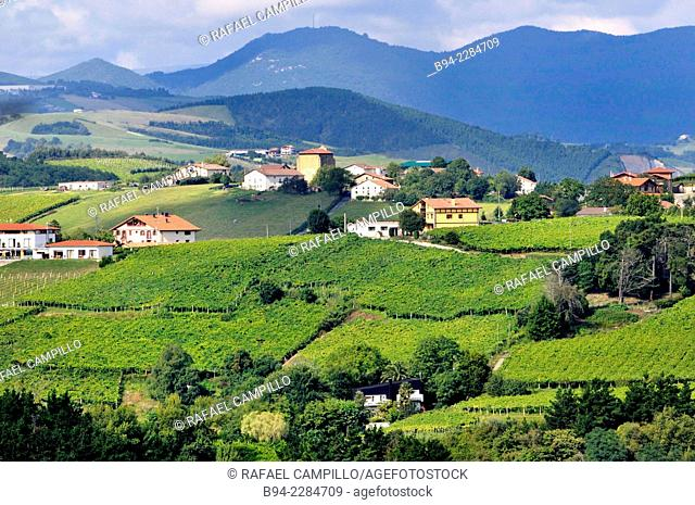 'Txakoli' vineyards, Getaria, Guipuzcoa, Basque Country, Spain