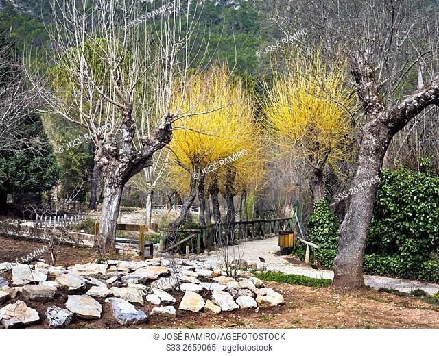 Botanical Garden in Cazorla Natural Park. Jaen. Andalucía. Spain. Europe