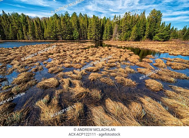 Costello Creek in spring in Algonquin Provincial Park, Ontario, Canada