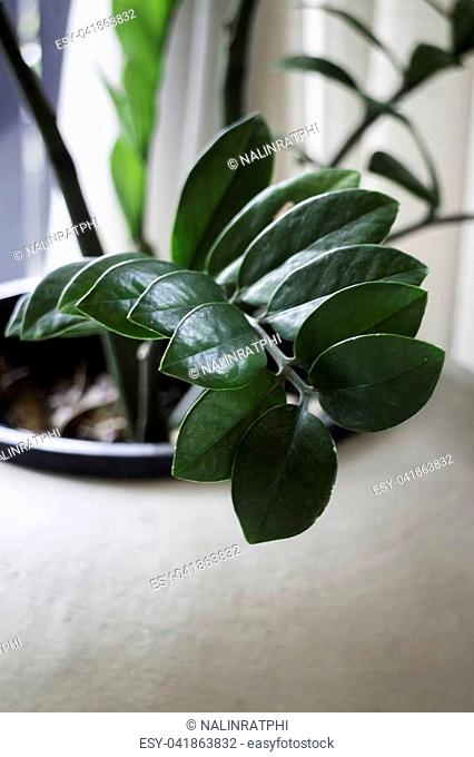 Tropical green leaves in vintage plant pot, stock photo