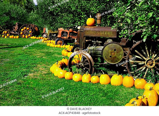 A row of old tractors and pumpkins in an orchard at Parsons Fruit Stand in Keremeos, British Columbia, Canada