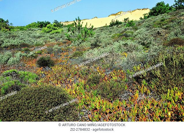 Southwest Alentejo and Vicentine Coast Natural Park. Alentejo, Portugal