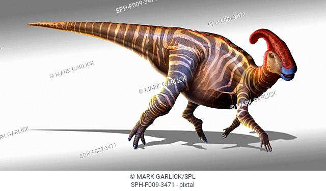 Parasaurolophus ('near-crested lizard'), first described in 1922, was a dinosaur that lived at the end of the Cretaceous period, around 70 million years ago