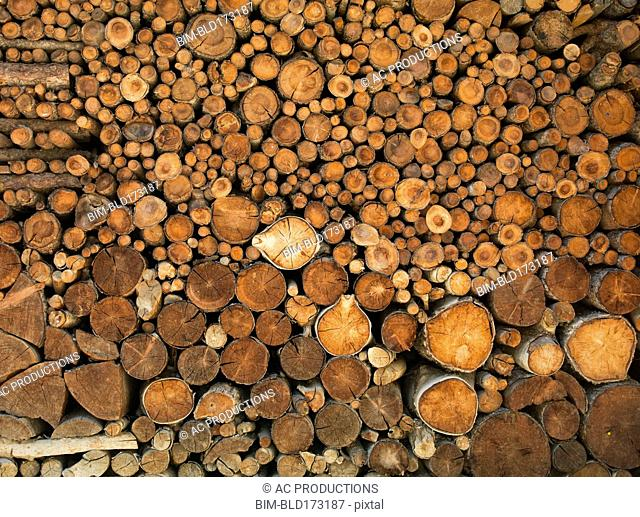 Pile of cut logs
