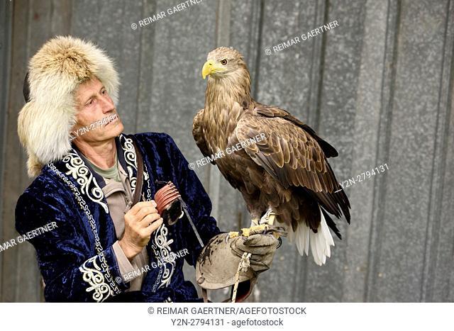 Trainer placing hood on White Tailed Eagle at Sunkar falcon sanctuary Almaty Kazakhstan