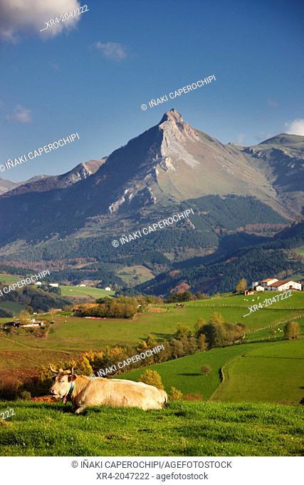 Cows grazing in front of Mount Txindoki, Lazkao, Goierri, Gipuzkoa, Basque Country, Spain