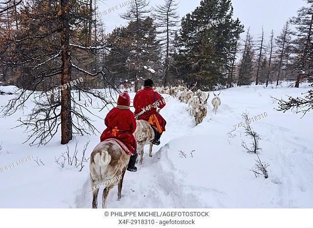 Mongolia, Khovsgol province, the Tsaatan, reindeer herder, winter migration