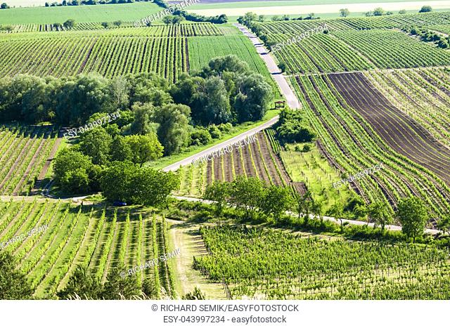 vineyards near Velke Bilovice, Czech Republic
