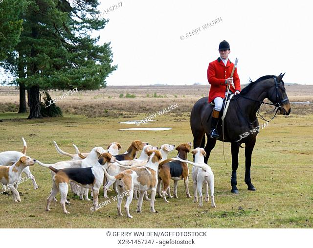 Huntsman Mike Woodhouse surrounded by the hounds of the New Forest Hounds