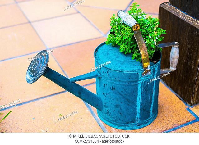 Gardening tools. Plants in a rusty watering can