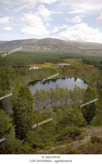Scotland, Highland, Glen Feshie, Conifer plantations and flood plains in Glen Feshie