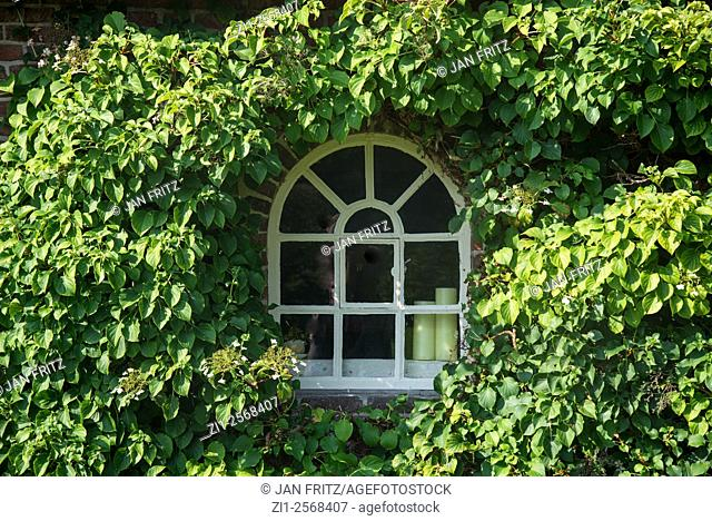 window in farm surrounded with ivy