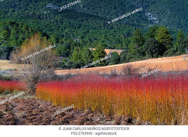 Wicker, Ruta del Mimbre (Wicker Route), Cuenca province, Castile - La Mancha, Spain