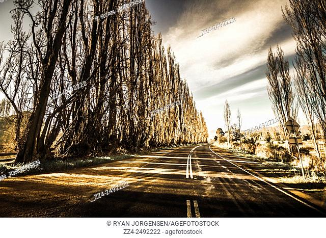 Tense wide angle of a curving road leading through rows of leafless trees with sunlight piercing through twisted and eerie branches
