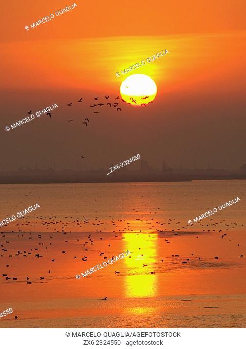 Sunrise at Encanyissada Lagoon with Glossy Ibis flock (Plegadis falcinellus). Ebro River Delta Natural Park, Tarragona province, Catalonia, Spain