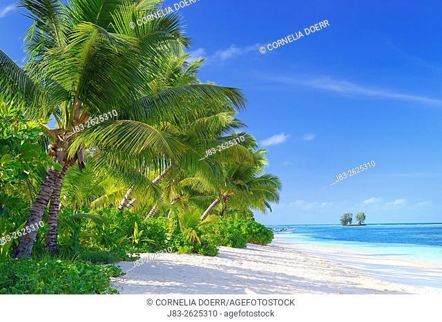 Tropical Palm Beach, La Digue Island, Seychelles, Indian Ocean, Africa